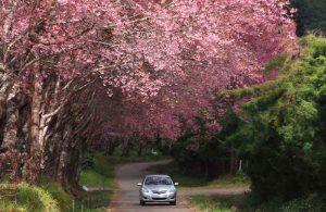 Voiture sur route au printemps