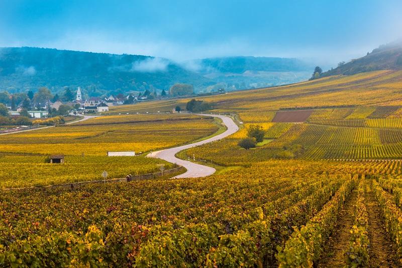 Route dans le vignoble à l'automne