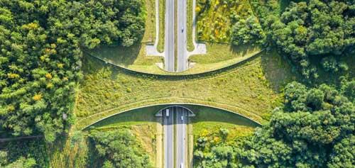 Ecopont sur autoroute pour faune sauvage