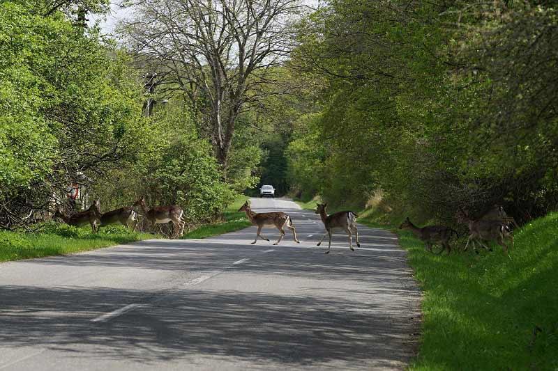 Un animal sauvage peut croiser votre route