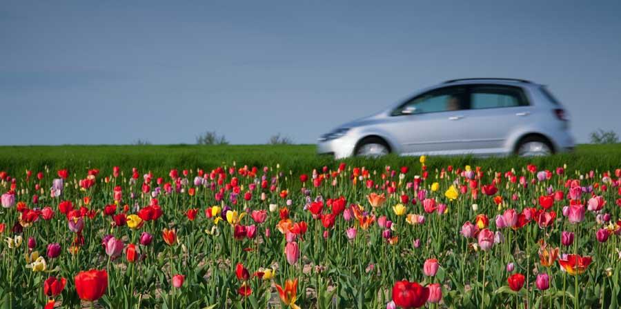 Route bordée de fleurs