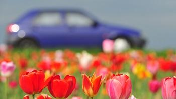 Voiture au printemps